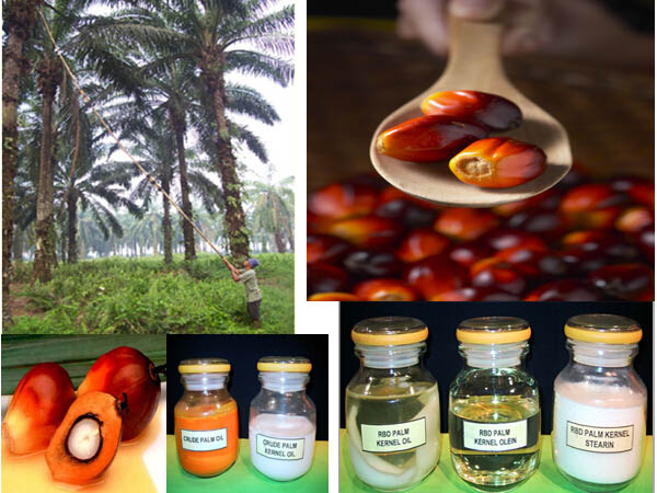 Applications of palm oil
