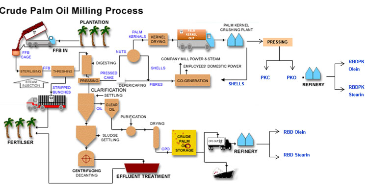 crude palm oil process chart