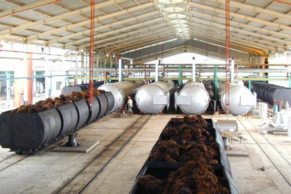 Palm oil mil process of sterilization