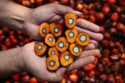 Palm-Oil-1
